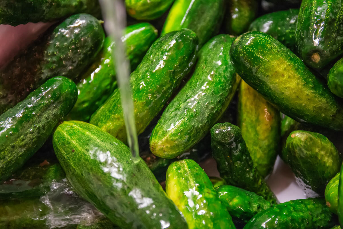 fresh-raw-cucumbers-in-the-kitchen-sink-under-running-water-washing-vegetables-and-healthy-eating