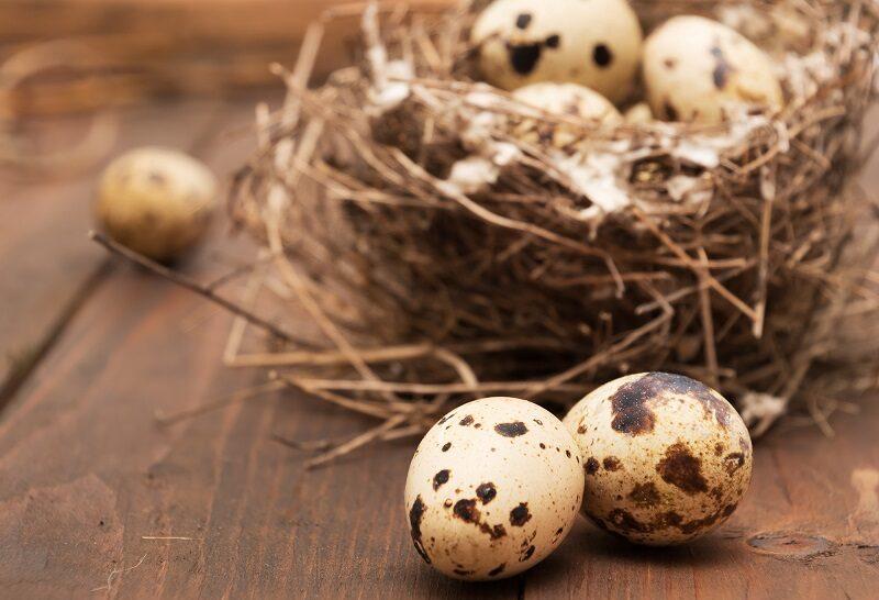 quails-eggs