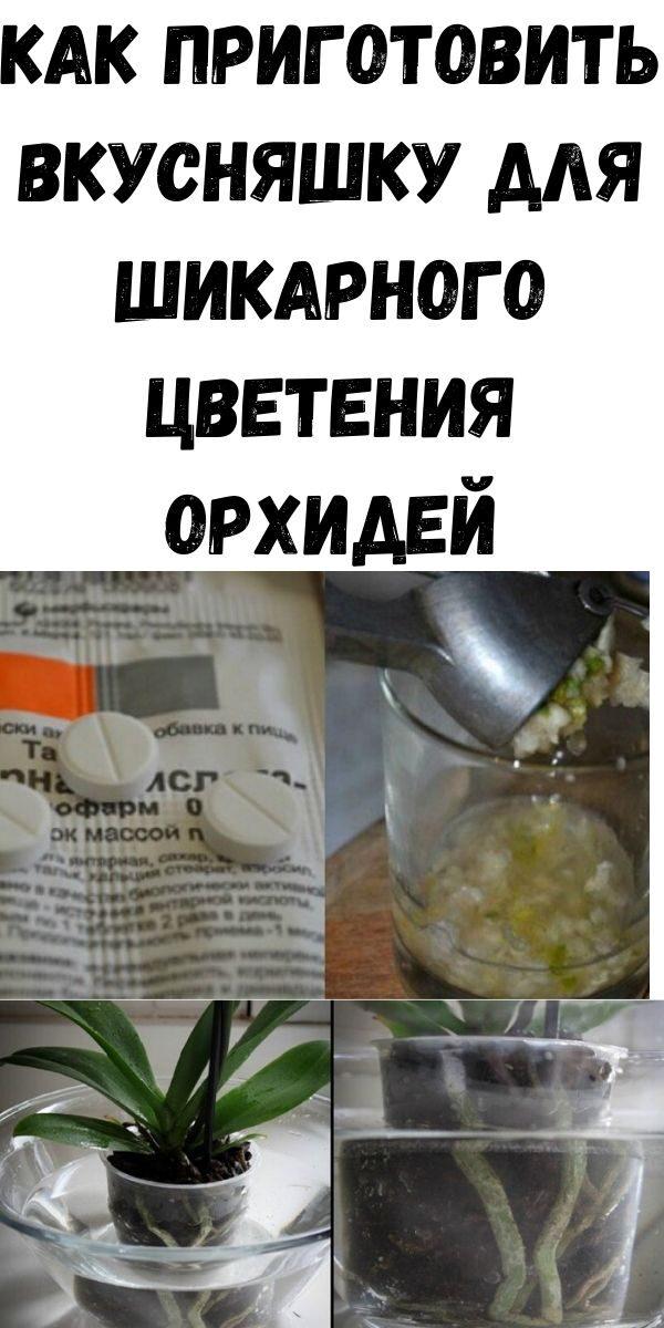 moya-lyubimaya-orhideya-tsvetet-kak-sumasshedshaya-kak-prigotovit-vkusnyashku-dlya-shikarnogo-tsveteniya-orhidey-5845209