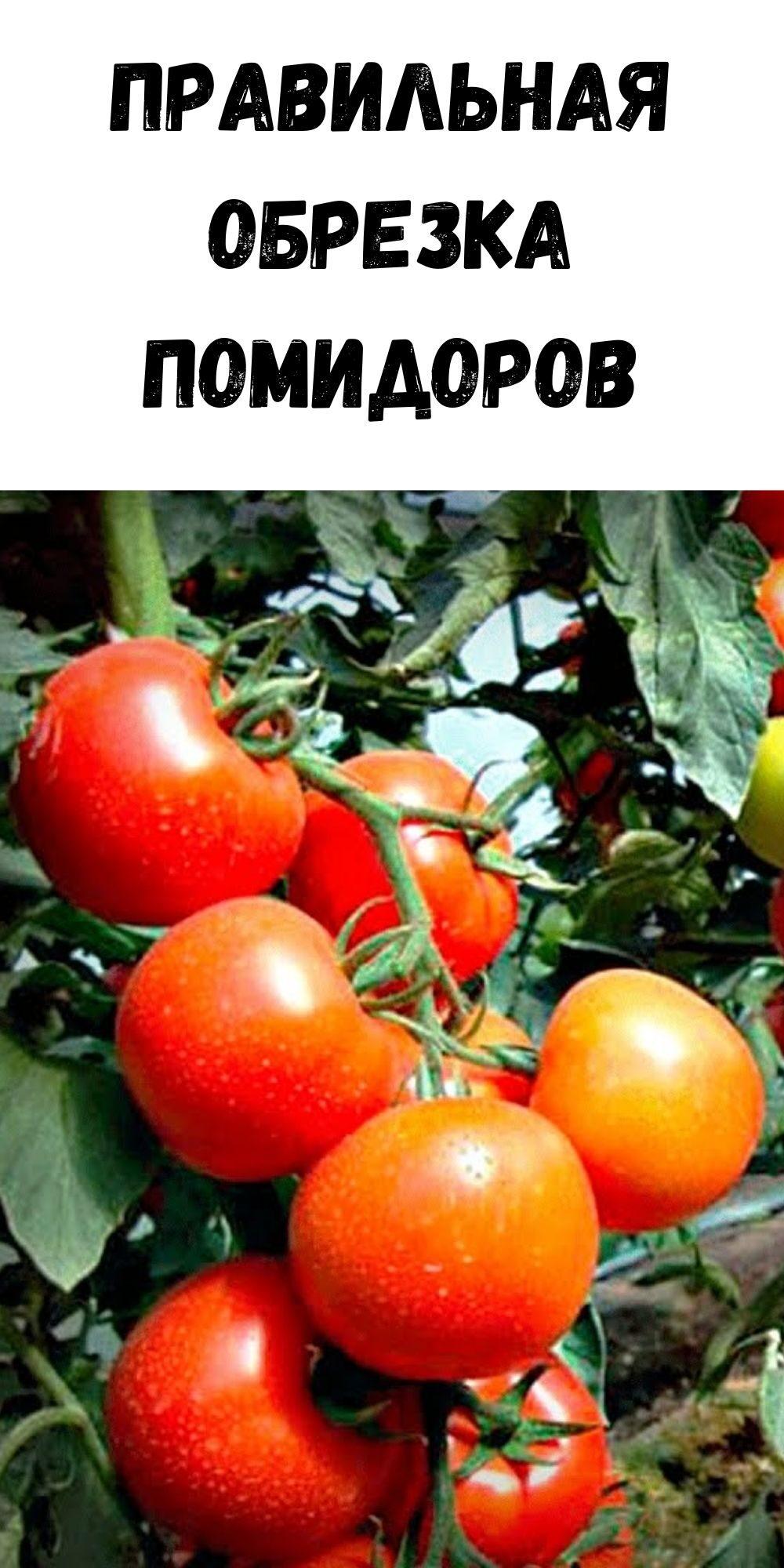 pravilnaya-obrezka-pomidorov-6781365