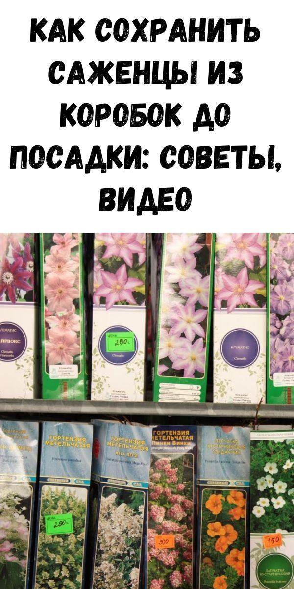 zhurnal-dlya-zhenschin-11-2-4529852